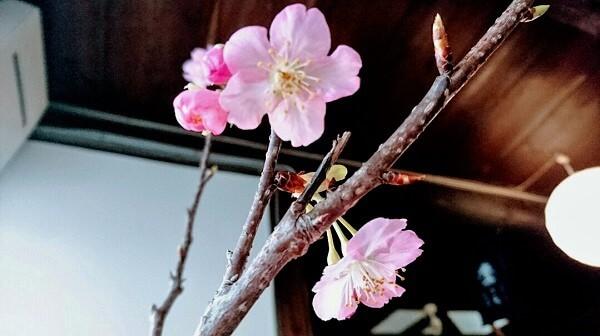 第17回城下町洲本レトロなまち歩きイベント中止のお知らせ